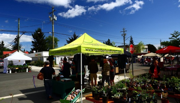 Earth Day Plant Sale for the Cumberland Forest – Saturday April 23rd