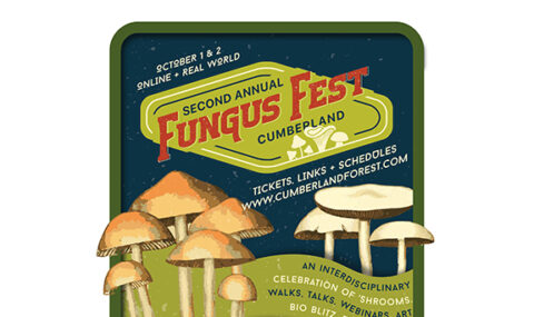 2nd Annual Cumberland Fungus Fest this weekend!